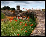 rome_2012_05